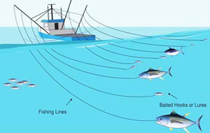 Pesca cacea