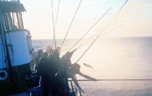 Pesca con caña Bonito del Norte